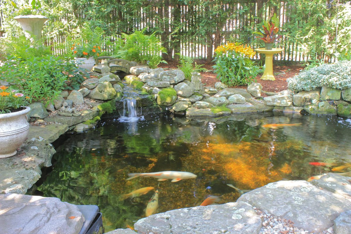 Backyard Koi Ponds and Water Gardens are a Growing Trend on Koi Ponds Ideas  id=71631
