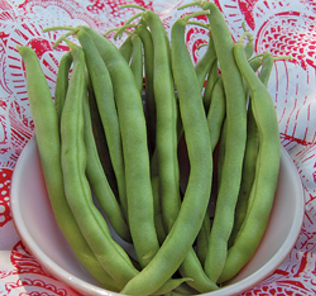 Kentucky Wonder Bush Bean Seeds | Branson Missouri Food Store