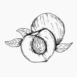 Peach kernel oil properties
