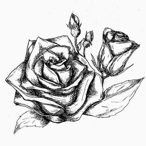 Rose floral water (Rosa damascena) from Bulgaria