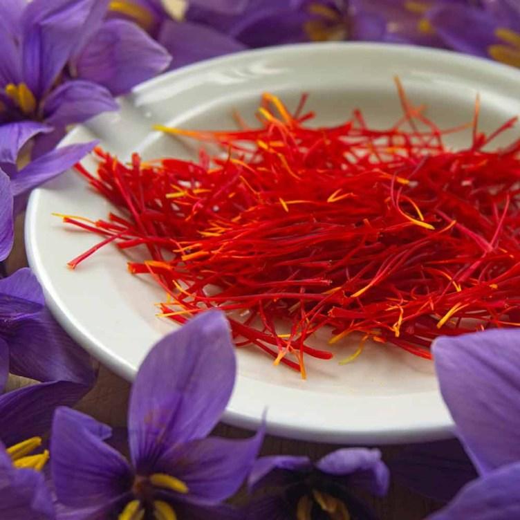 Saffron Crocus Bulbs - (Crocus sativus)   Terroir Seeds