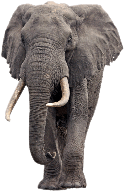 Popular And Trending Elephant Stickers On Picsart
