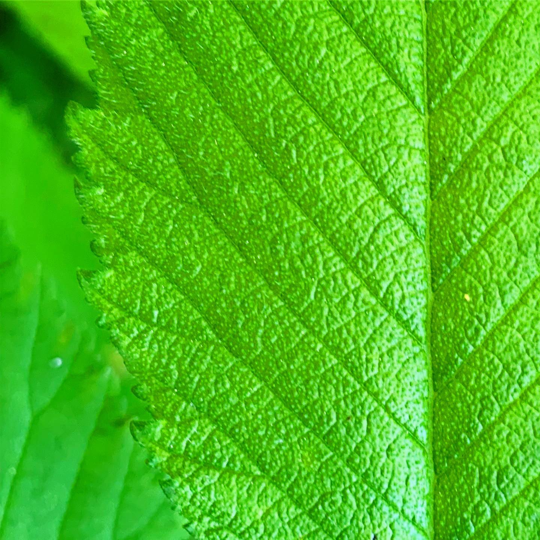 Freetoedit Picsart Green Leaf Colorful Color Naturephot