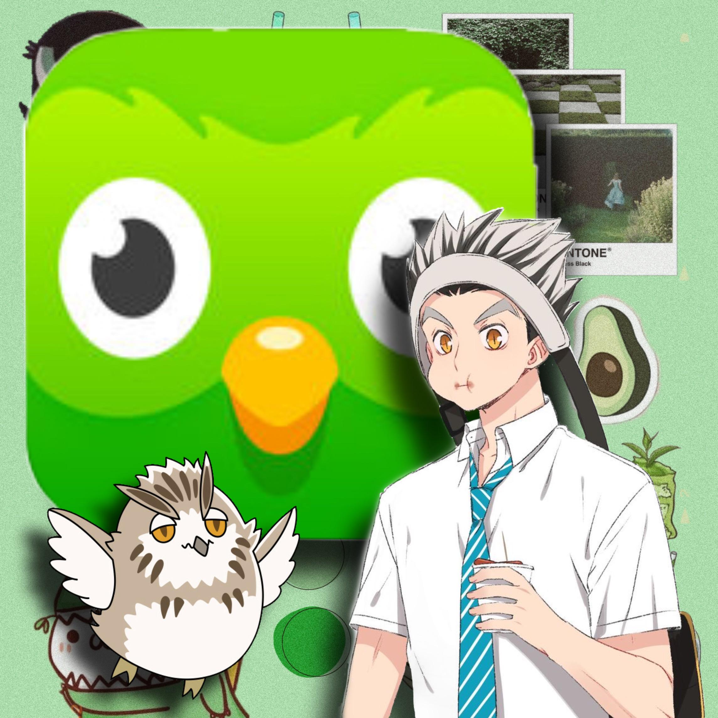 bokuto haikyuu green duolingo owl image