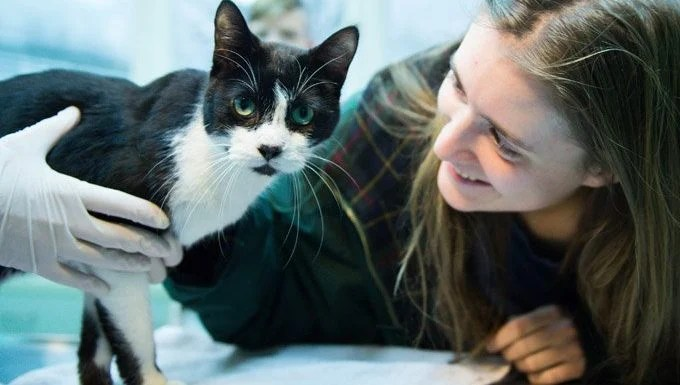 cat with vet during national pet dental health month