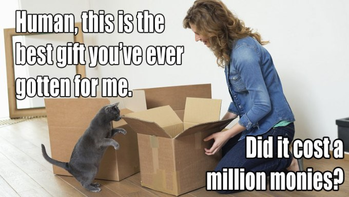 cat-owners-know-3