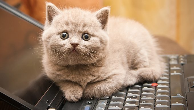 cat lying on a laptop