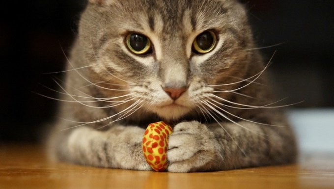 Our cat Macey went wild for these sardine-flavored cat toys.....and you can see, she had a firm grip on this one!