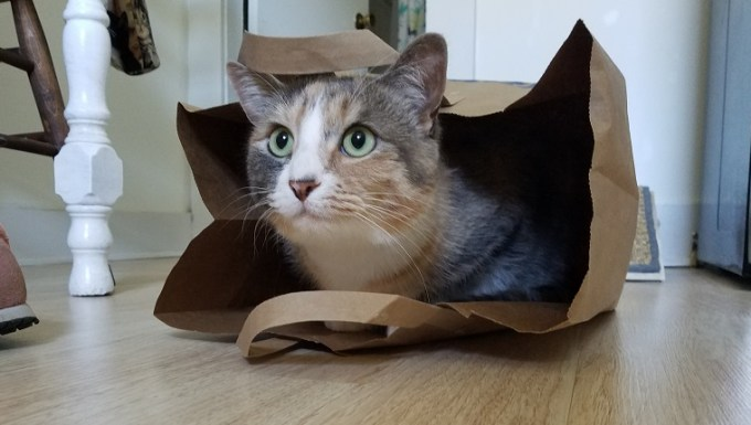 A calico cat in a paper shopping bag.