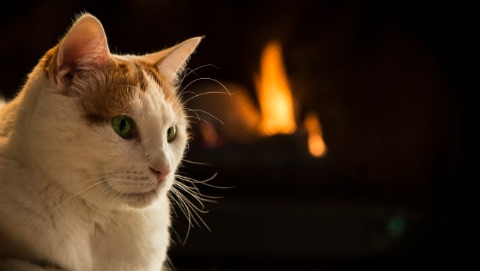 Domestic Cat, Fireplace, Wood Burning, Fire - Natural Phenomenon, Heat - Temperature