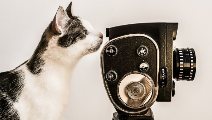 White and gray cat looking into viewfinder of vintage camera. White background.