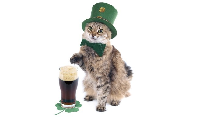St. Patrick's day cat with beer