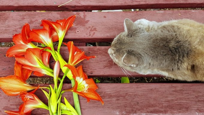 Cat and lilies