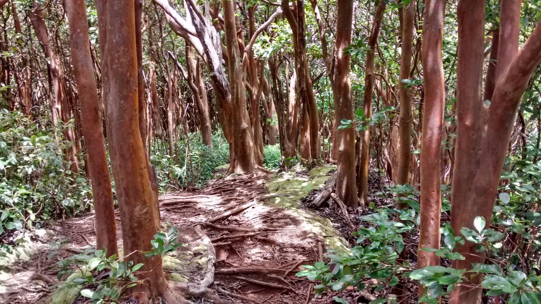 Hawaii Loa Ridge Trail, Hawaii Kai, Oahu, Hawaii