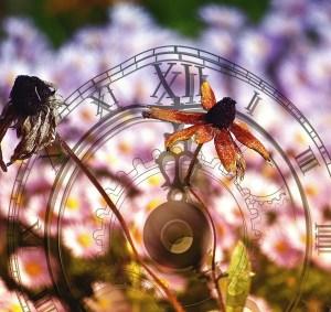 flower-629984_1920