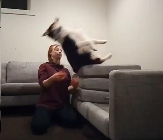要接住本汪哦!牧羊犬從高處往後躺 跟馬麻玩信任遊戲 | ETtoday寵物動物新聞 | ETtoday 新聞雲