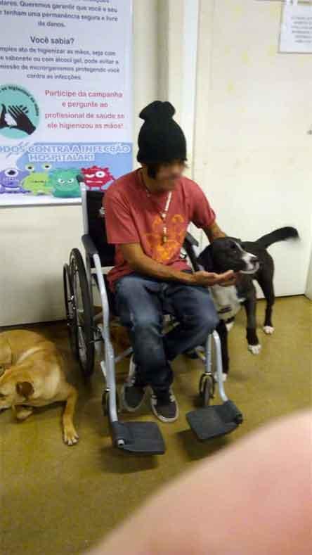 homeless, perros, esperan, hospital, rio du sul, excelsior,brasil, noticias, mascotas, calle, condicion, hombre, amo, peros, lo mejor, del mundo, flipboard, noticias de hoy