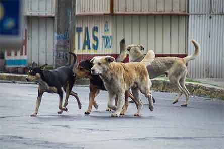 perros, matar, estorben, ordenanza, argentina, pueblo, 6933/18, noticia,s maltrato, animal, excelsior, global, flipboard