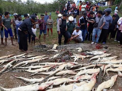 Turba mata a 292 cocodrilos para vengar muerte de vecino