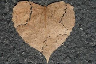 Noticias de Hoy, Te has preguntado que pasa cuando te rompen el corazon, Te has preguntado que pasa cuando rompen corazon, Preguntado que pasa cuando rompen corazon, salud, ciencia, estudios, dia del amor y la amistad, 14 de febrero, corazones rotos, UNAM, Facultad de Medicina