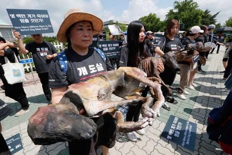 Fiesta de 'carne de perro' en Corea del Sur; varios protestan