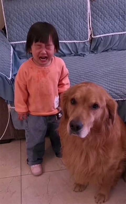 Perrito defiende a niña de los regaños de su mamá
