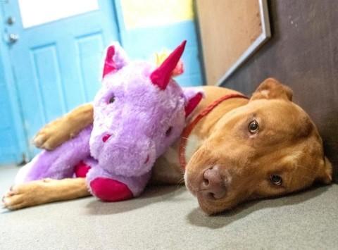 Perro callejero que robó unicornio de peluche ya tiene hogar