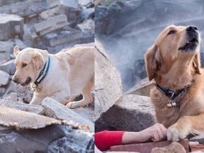 La foto de este perrito pidiendo ayuda para su familia en un edificio en ruinas se volvió viral.