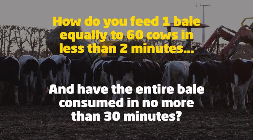 Feeding-60-cows
