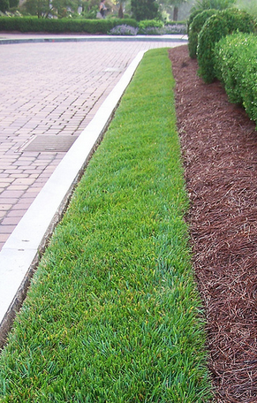 edging curb lines