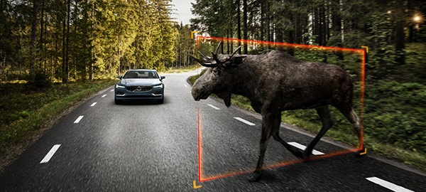 Detectare animale mari Volvo