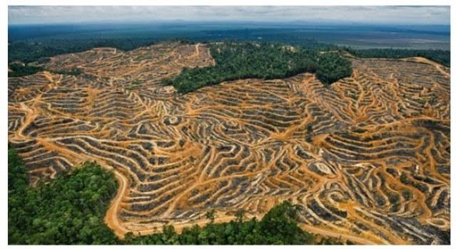 queda-no-desmatamento-na-amazonia-16-1