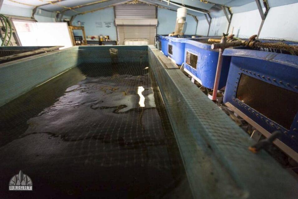 Bể cá Aquaponics Vs Hydroponics