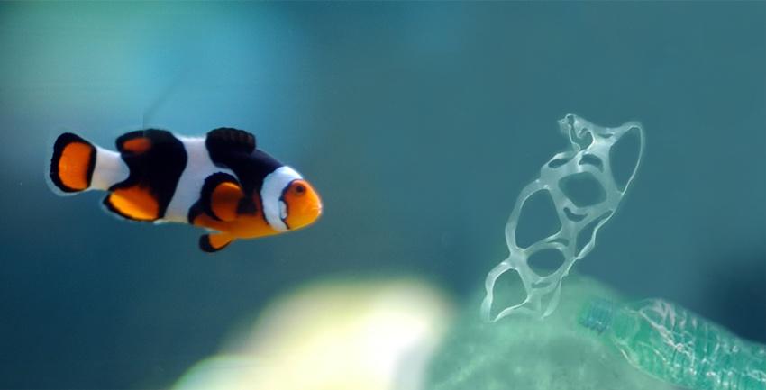 6-2-1-plastic-fish-ratio