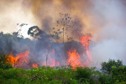 Slash and burn rainforests