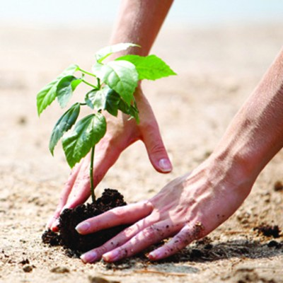 Planting trees for the future