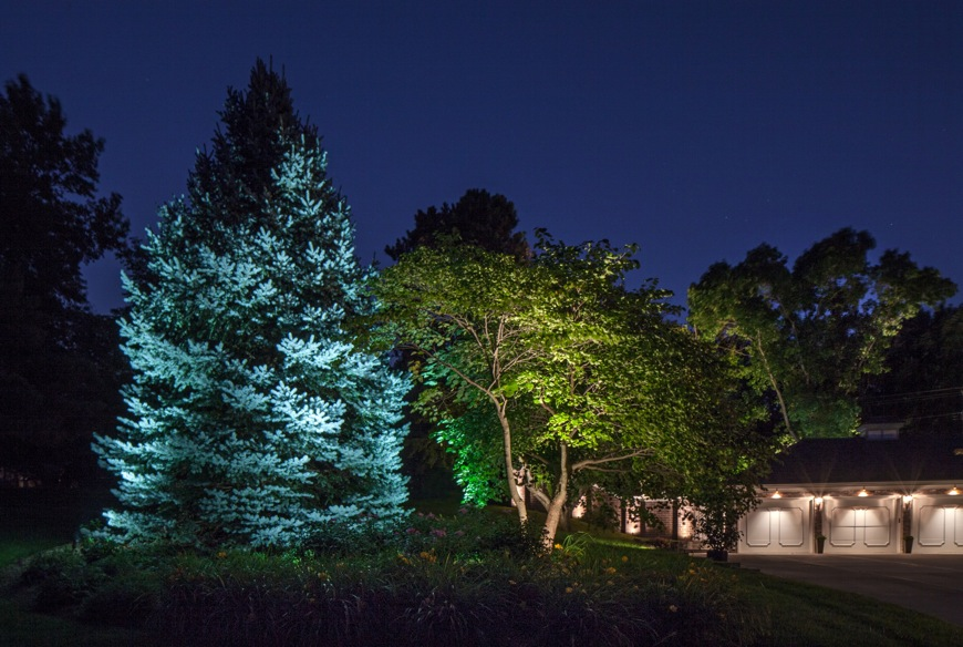blue spruce with a cool white led bulb