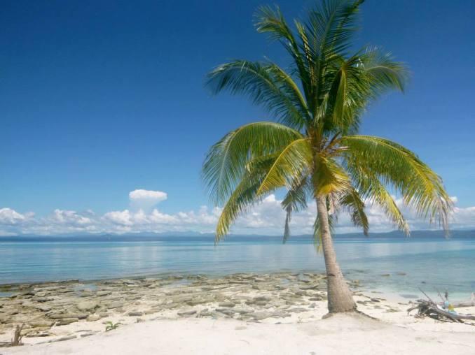 cat-lemme-palm-tree