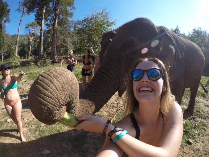julie-tschida-elephant