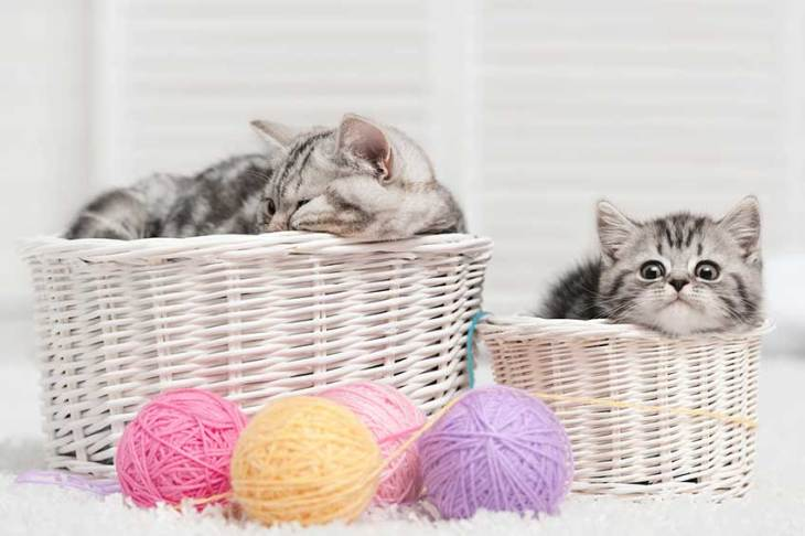 cat-basket