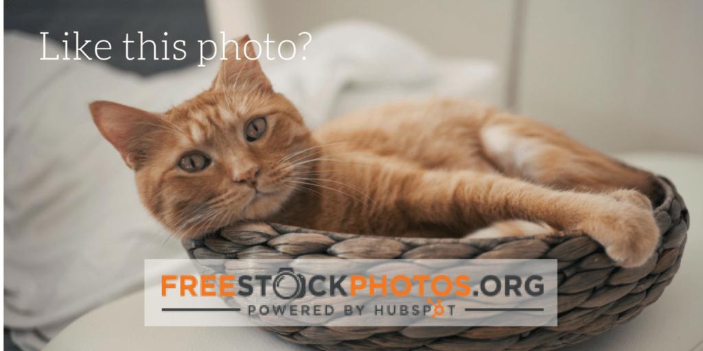 FreeStockPhotoCat