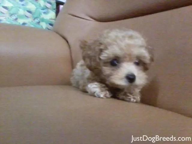 Dog Breeds Dog Breeds Information Low Shedding Dog Breeds Dog | Dog ...