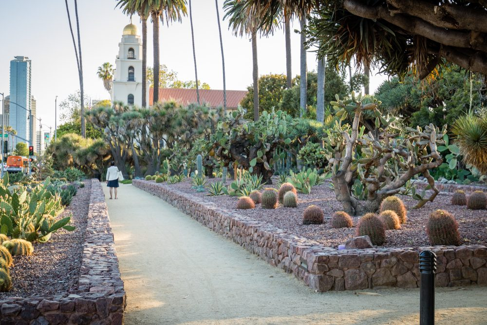 Beverly Gardens Park restoration cactus