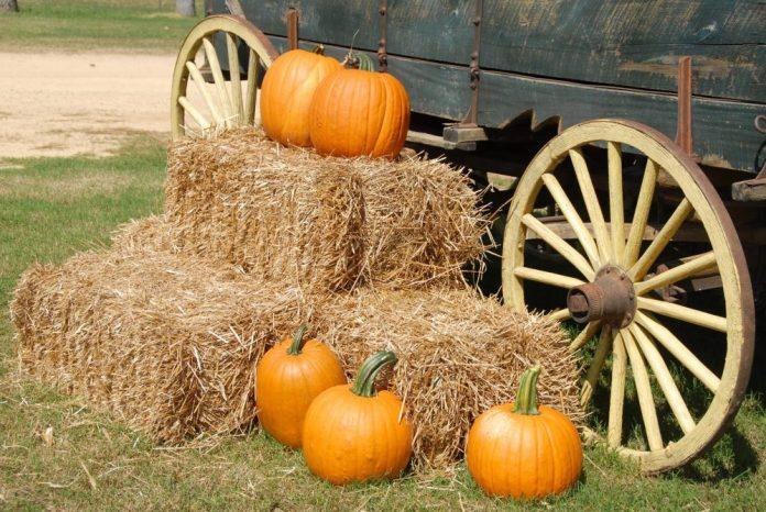 halloween drive thru hauntoween