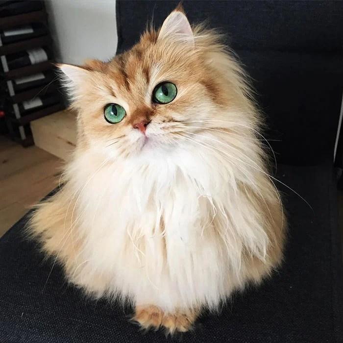 gato_fotogenico_9