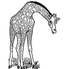 animal coloring # 70