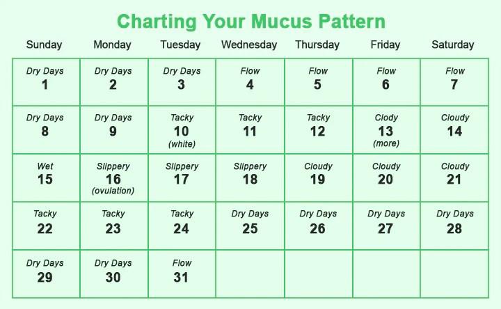 Chart The Mucus Pattern
