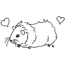 guinea pig coloring page # 2