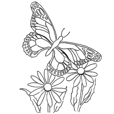 butterfly coloring pages for adults # 2