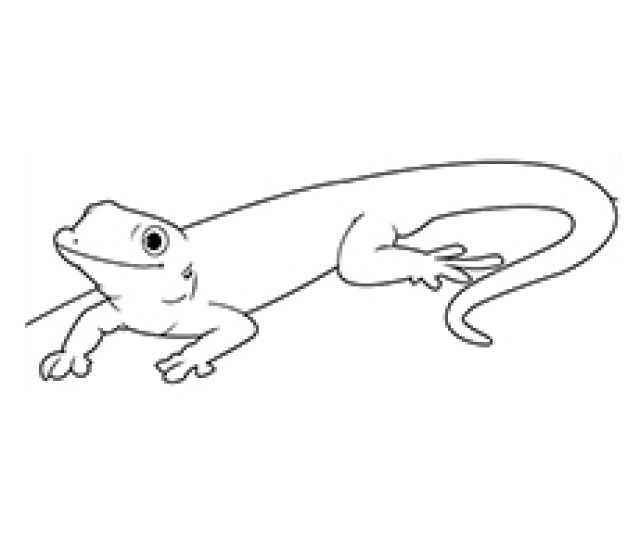 Top  Free Printable Lizard Coloring Pages Online